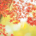 元気を取り戻す季節 秋