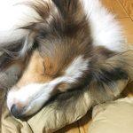 愛犬が気持ちよさそうに眠る、その場所は・・・??? 〜スタッフよもやま話し〜
