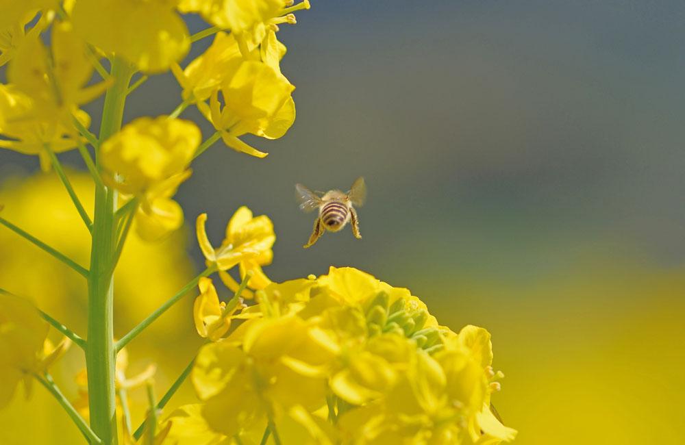 春の終わりを音に知る   ~ 穀雨 ~
