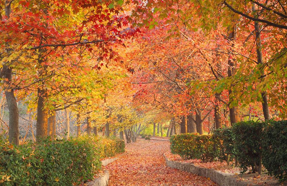 チョコレート色の秋   ~霜降~